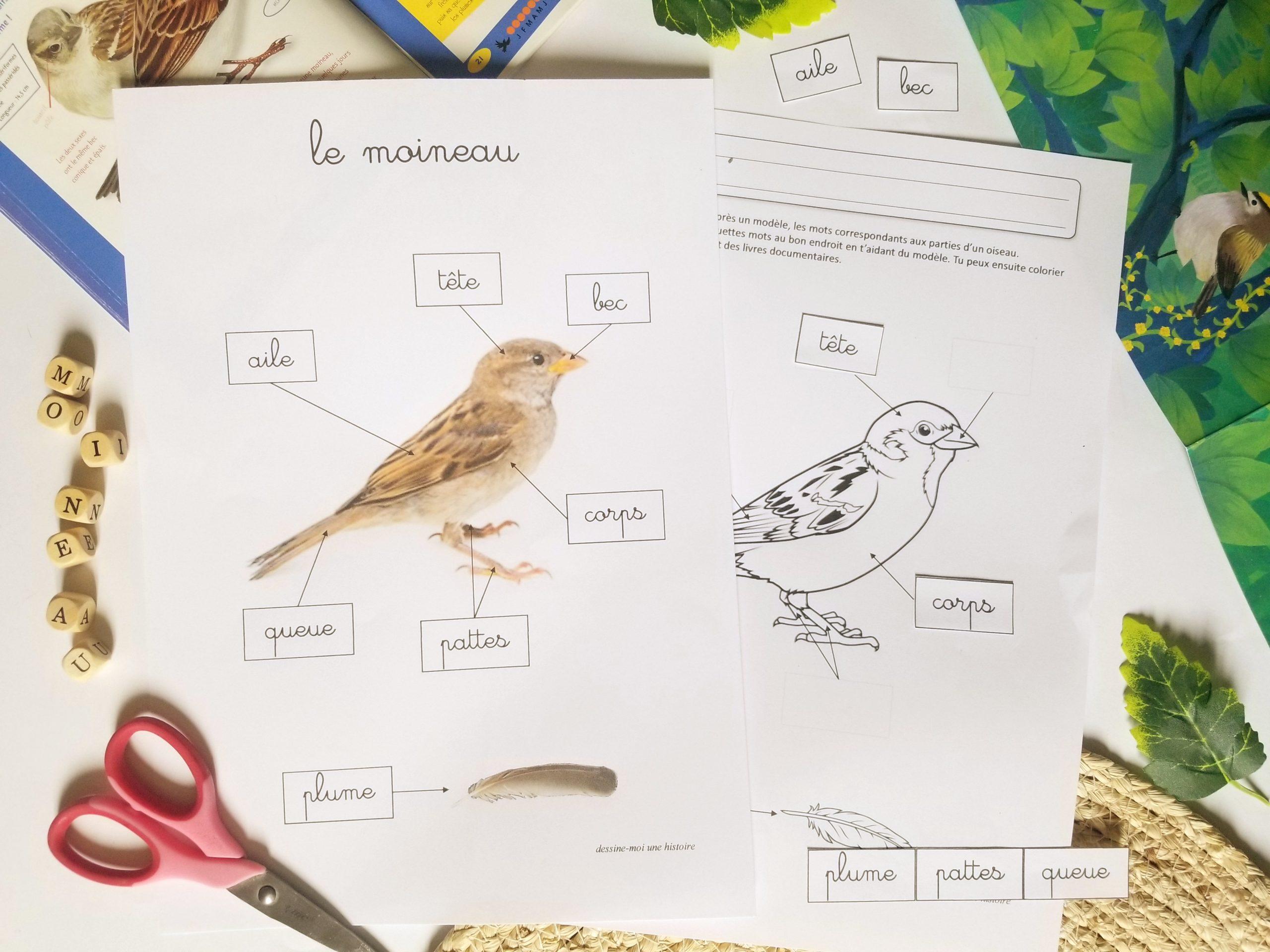 vocabulaire anatomie oiseau maternelle moineau, les oiseaux en maternelle activités